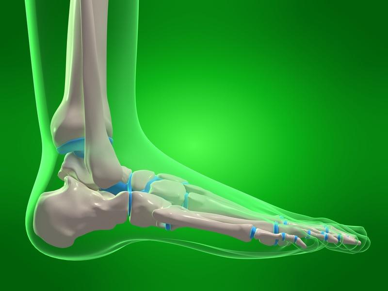 röntgenaufnahme fußskelett