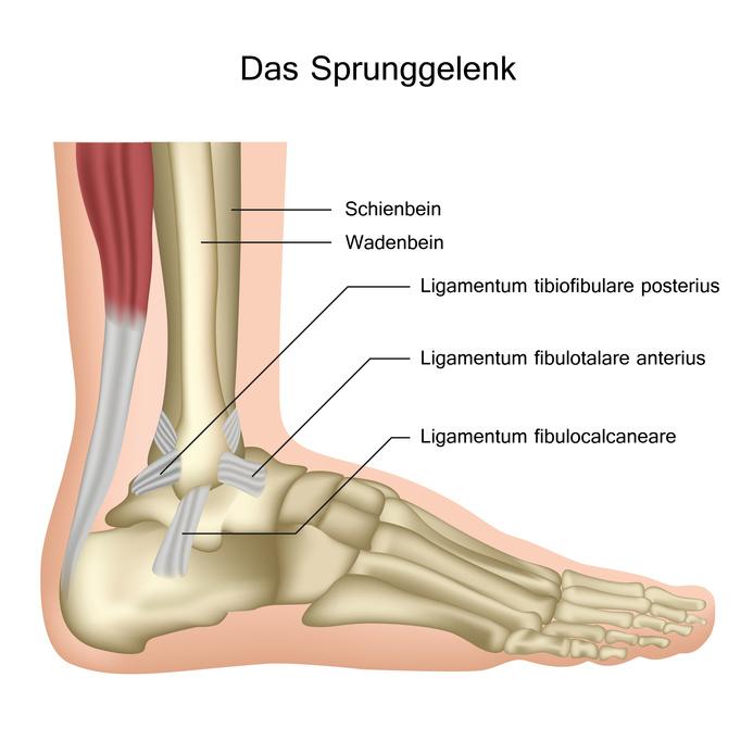 Sprunggelenk - Anatomie, Funktion & Erkrankungen