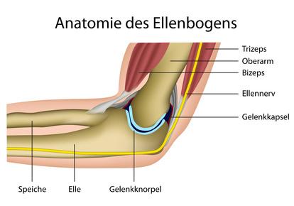 Ellenbogengelenk, anatomischer Aufbau